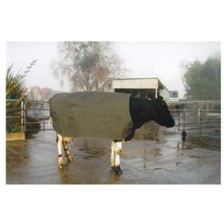 Cow Cover Thermal Emerge Large Friesian